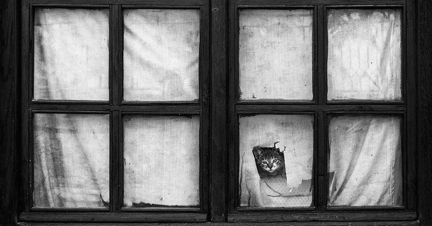 gatos-esperando-donos-1