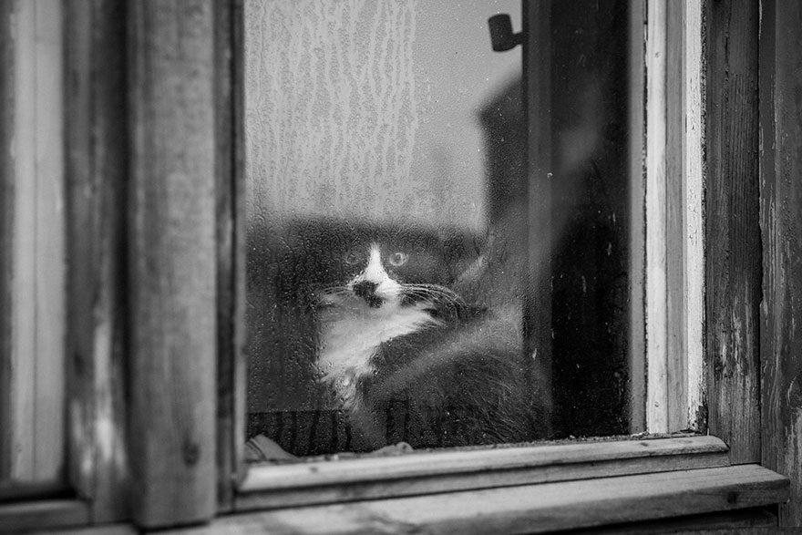 gatos-esperando-donos-10