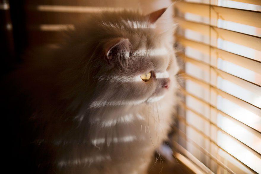 gatos-esperando-donos-11
