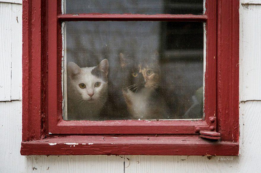 gatos-esperando-donos-12-13