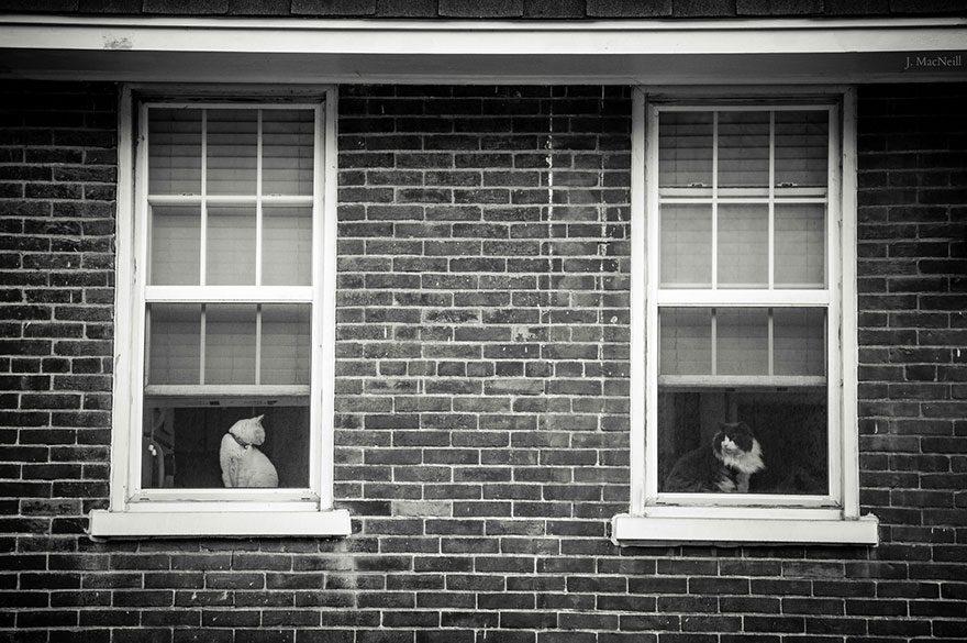 gatos-esperando-donos-14-15