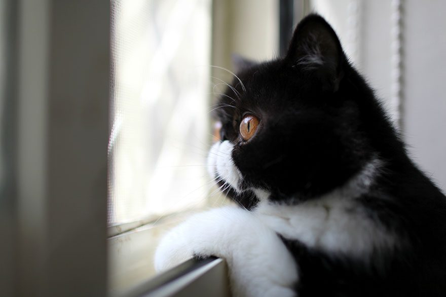 gatos-esperando-donos-16