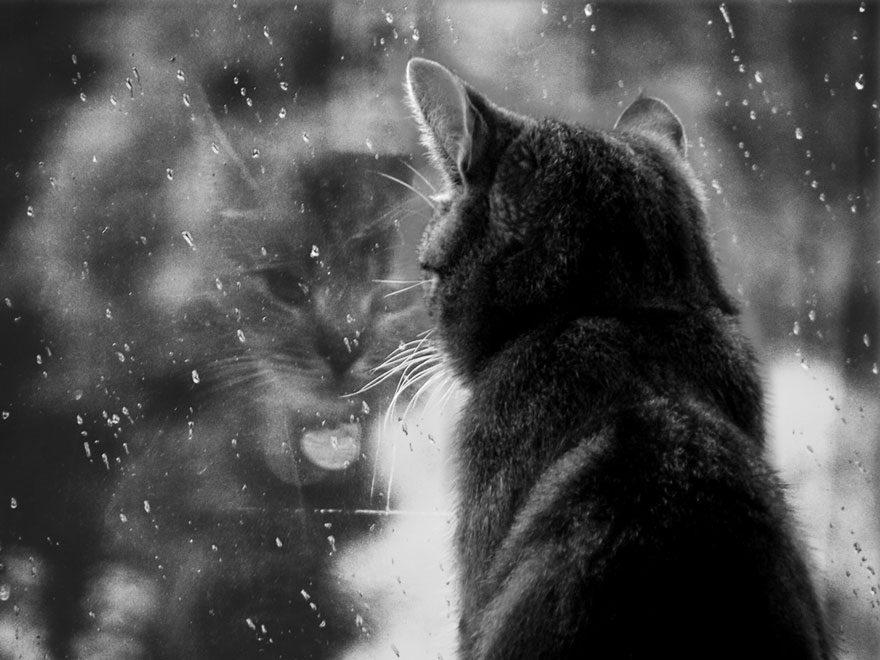 gatos-esperando-donos-17
