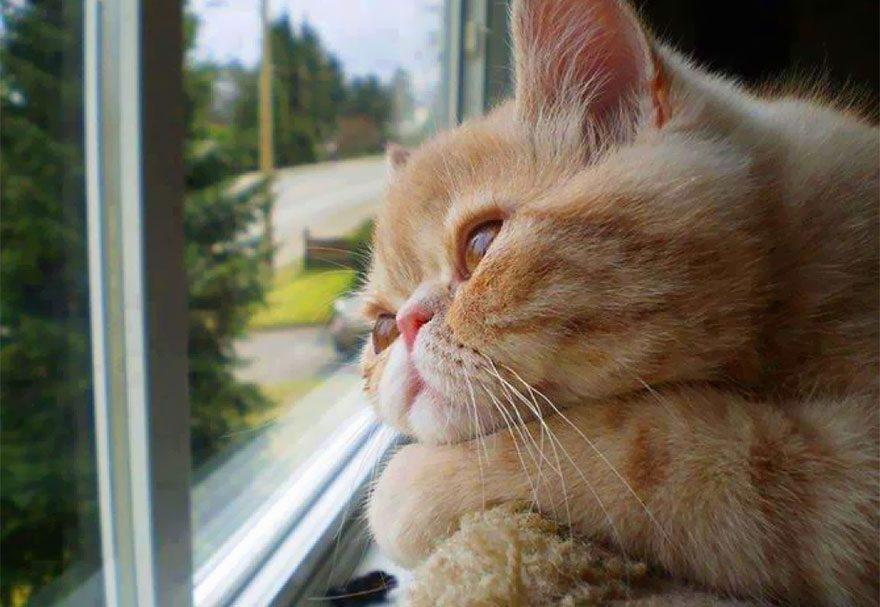 gatos-esperando-donos-19