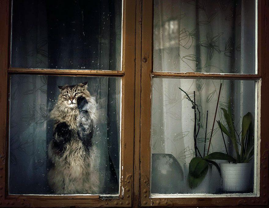 gatos-esperando-donos-2