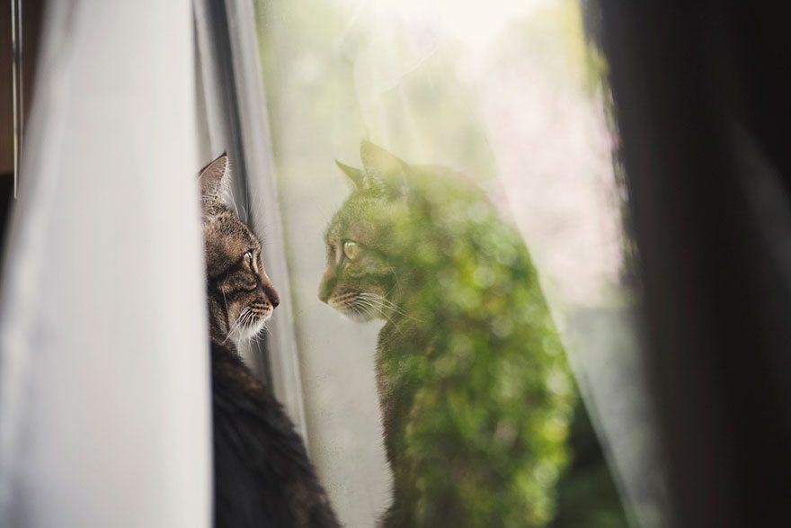 gatos-esperando-donos-20