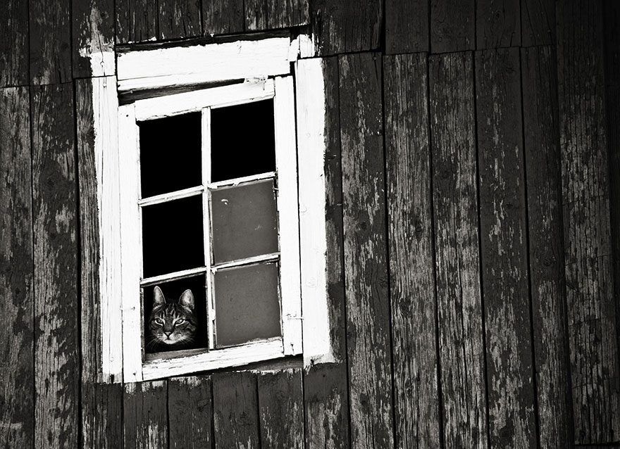 gatos-esperando-donos-21
