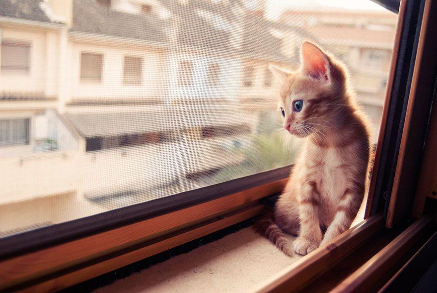 gatos-esperando-donos-22