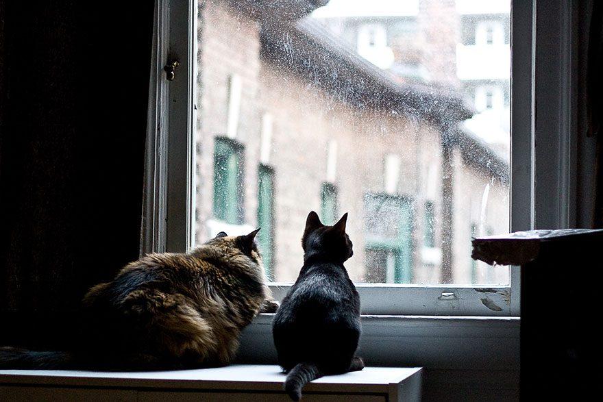 gatos-esperando-donos-23-24