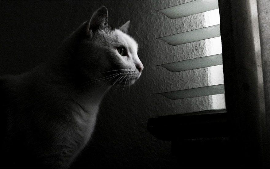 gatos-esperando-donos-25