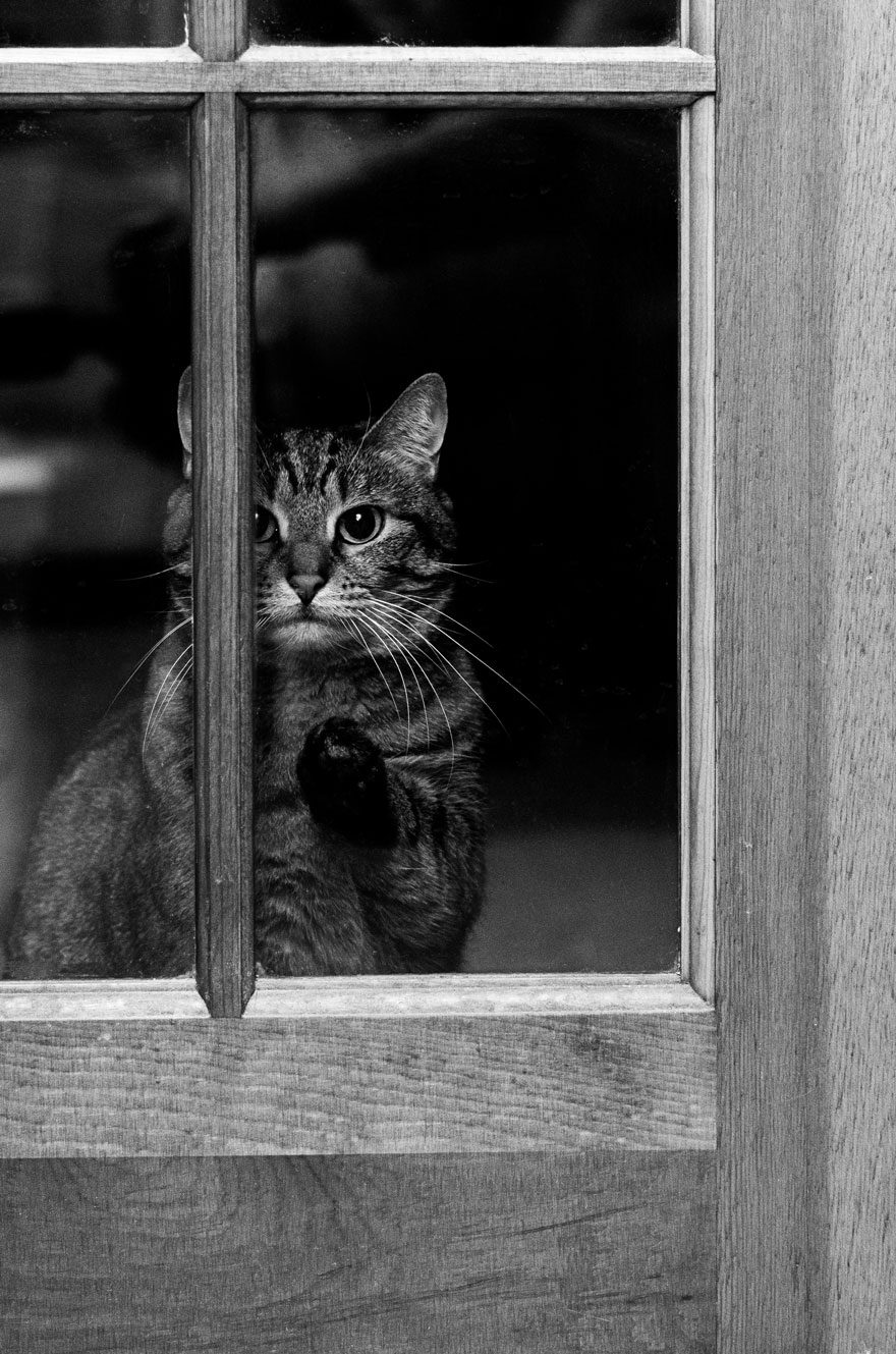gatos-esperando-donos-26
