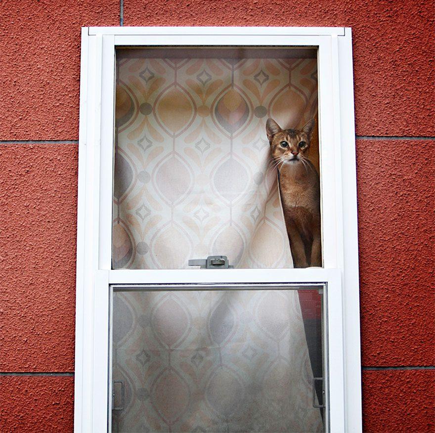 gatos-esperando-donos-27