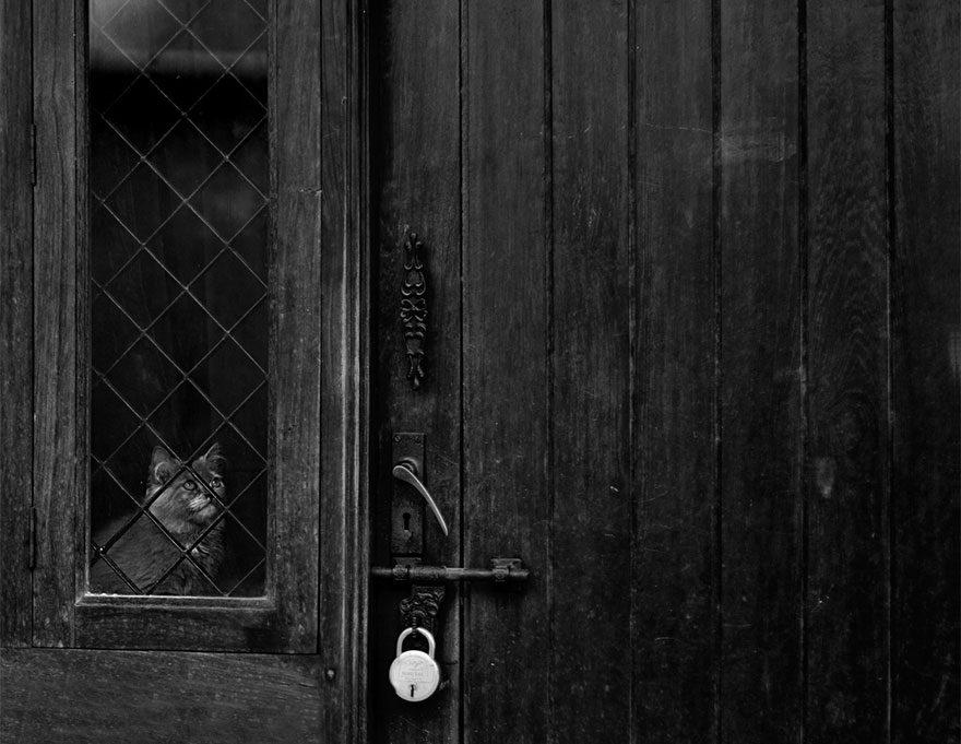 gatos-esperando-donos-28