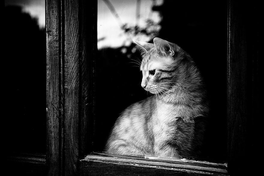 gatos-esperando-donos-29