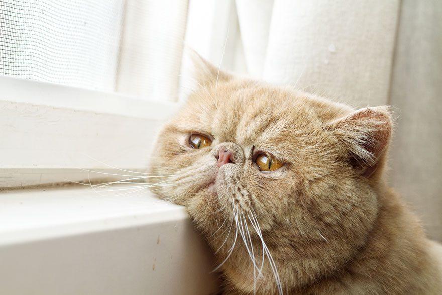 gatos-esperando-donos-3
