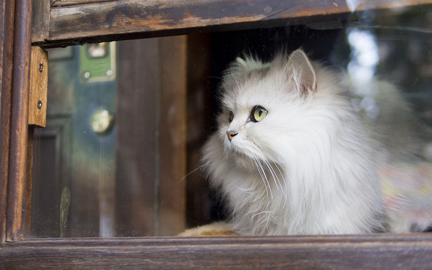 gatos-esperando-donos-30