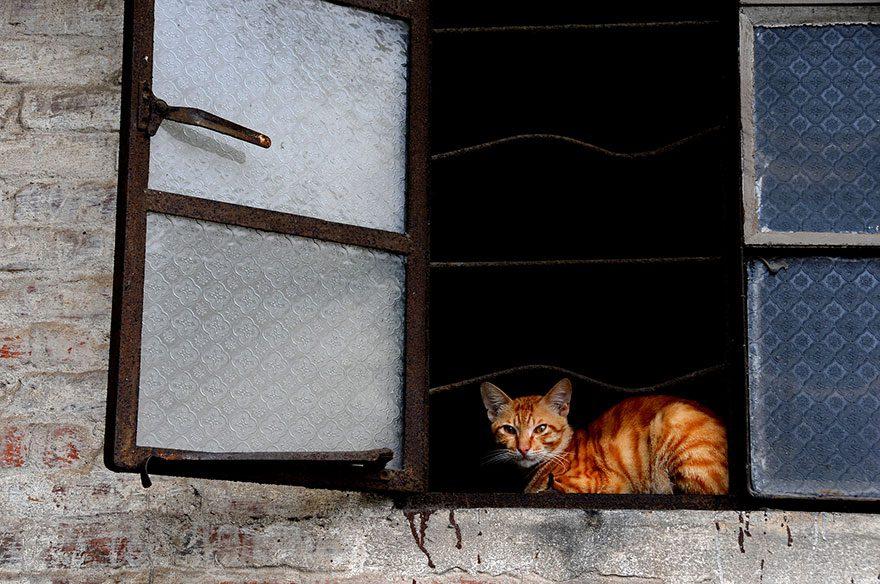 gatos-esperando-donos-31