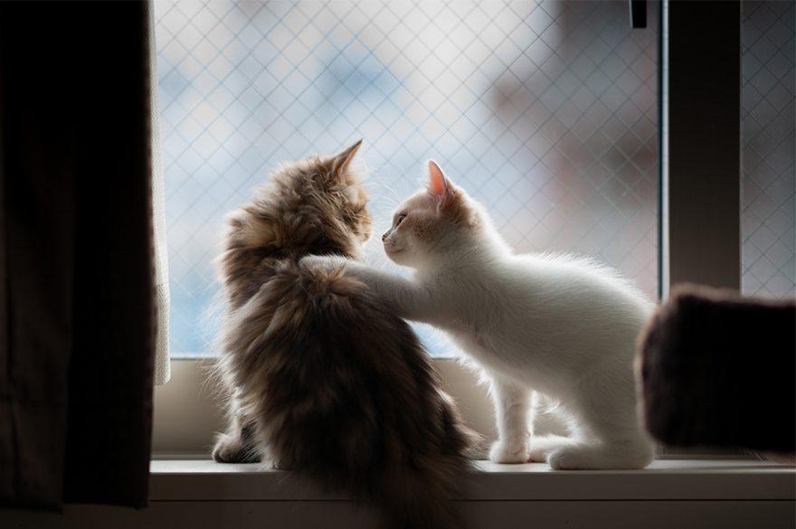 gatos-esperando-donos-32-32