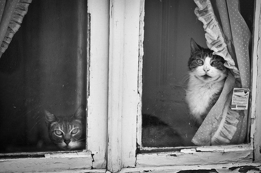 gatos-esperando-donos-5-6