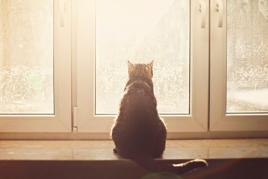 gatos-esperando-donos-7