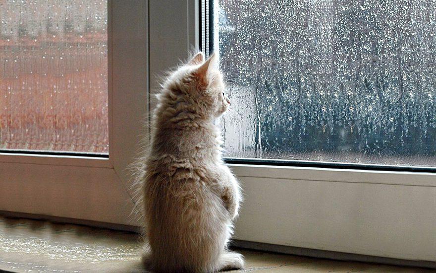 gatos-esperando-donos-8