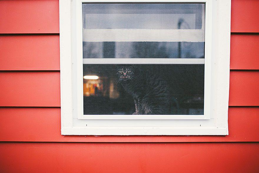 gatos-esperando-donos-9