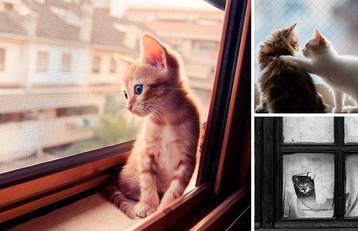 gatos esperando donos