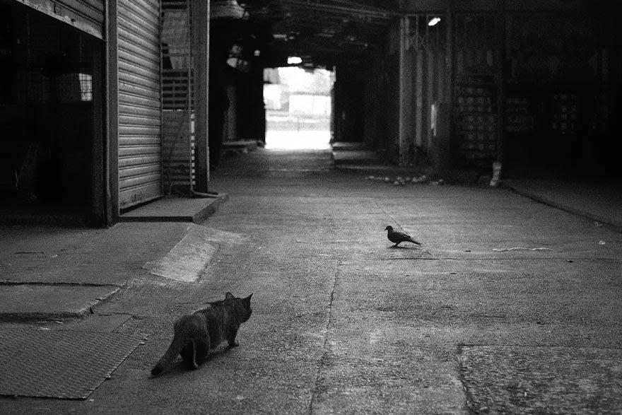 cat-22