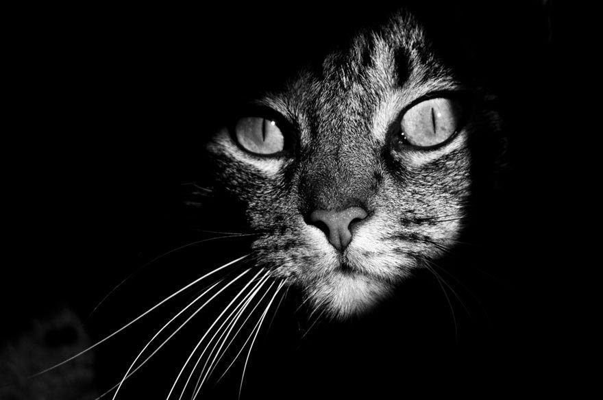 cat-28
