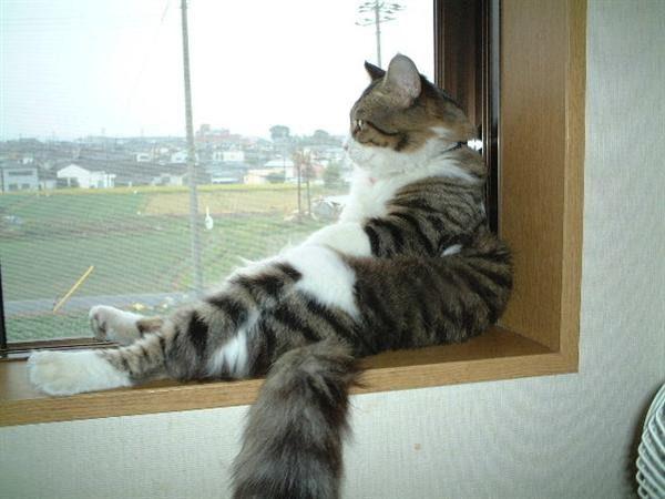 gatos-sentados-estranhos-11