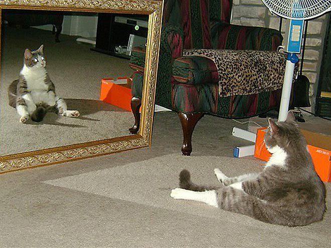 gatos-sentados-estranhos-13