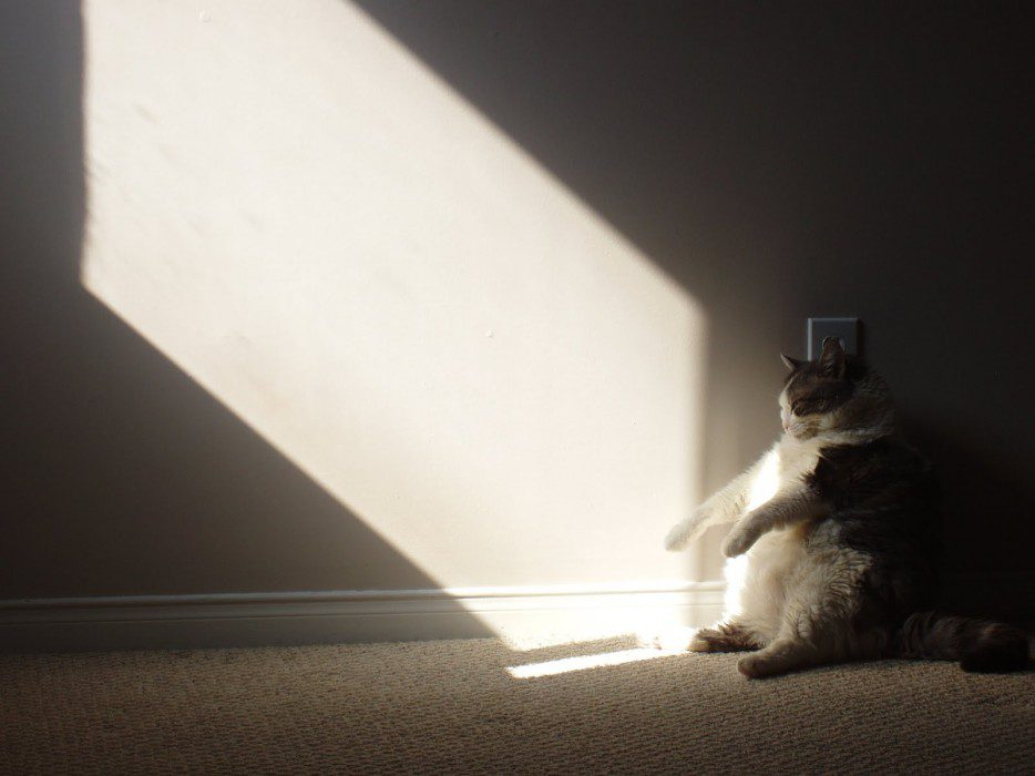 gatos-sentados-estranhos-16