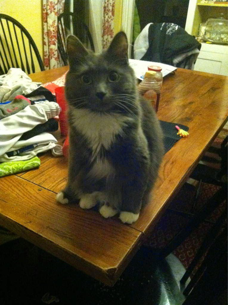 gatos-sentados-estranhos-7