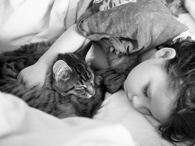 amizade-gato-terapia-12