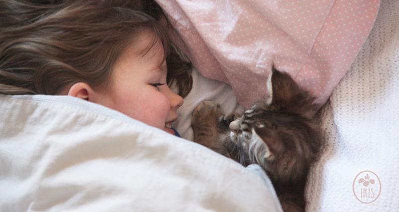 amizade-gato-terapia-14