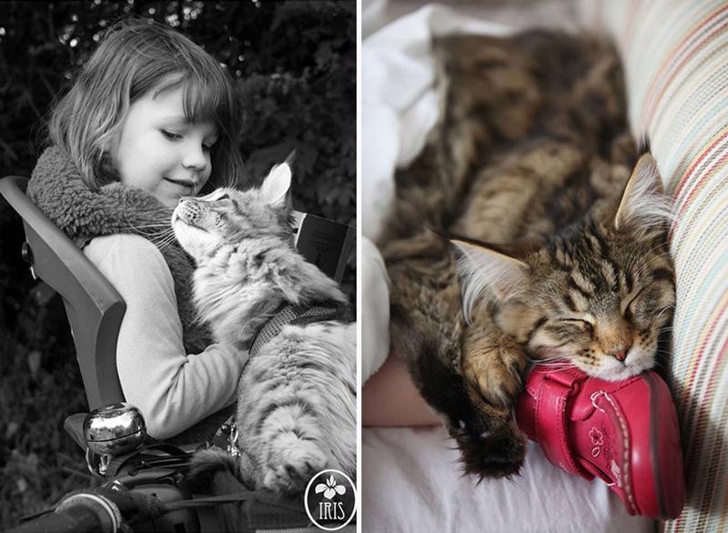 amizade-gato-terapia-21
