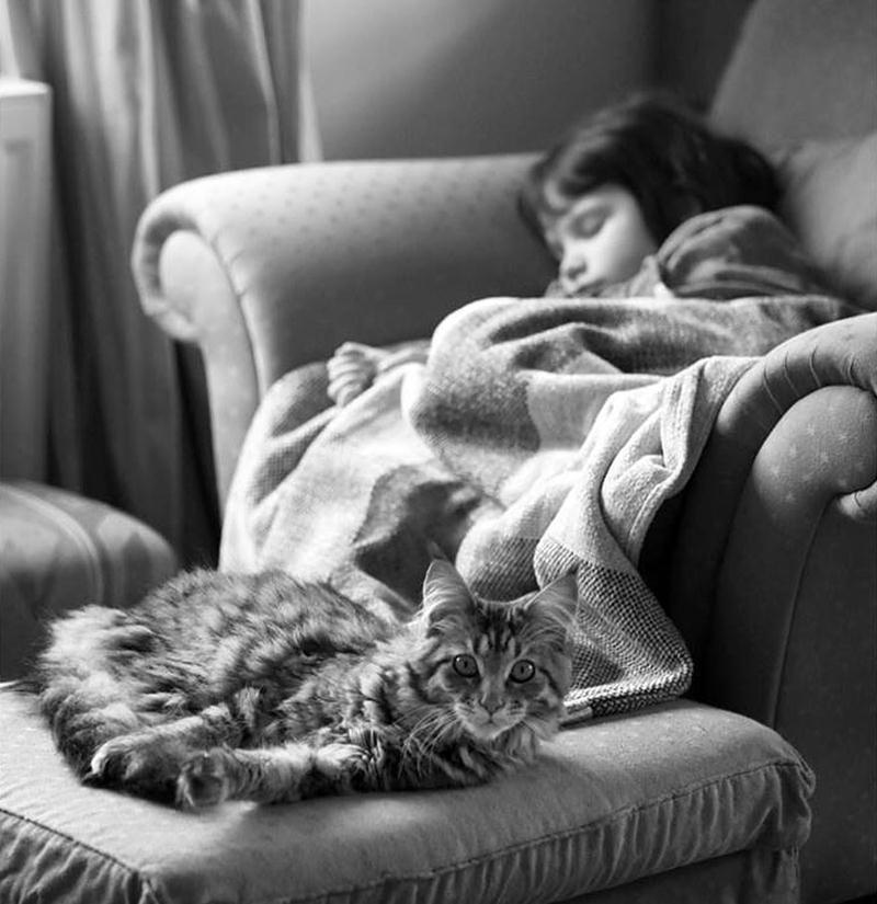 amizade-gato-terapia-22