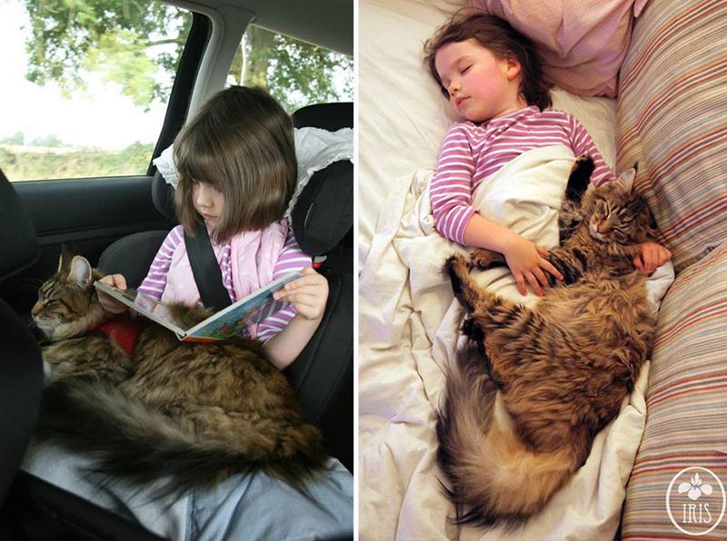 amizade-gato-terapia-5