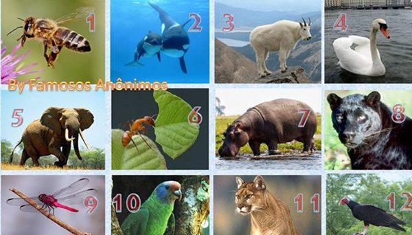 animais de poder parte 2