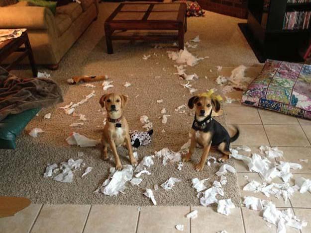 aprender-cachorros-6