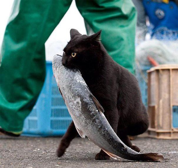 gatos-roubando-11
