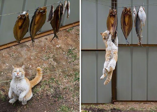 gatos-roubando-2