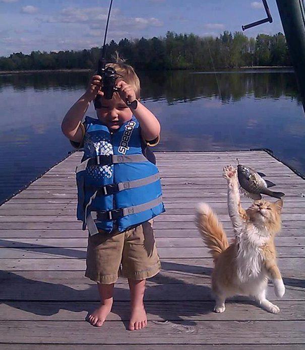 gatos-roubando-3