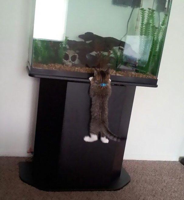 gatos-roubando-5