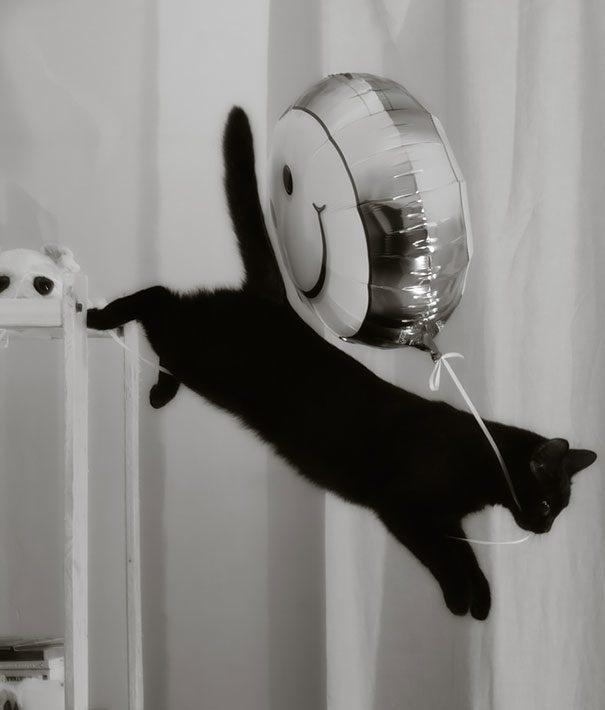 gatos-roubando-6
