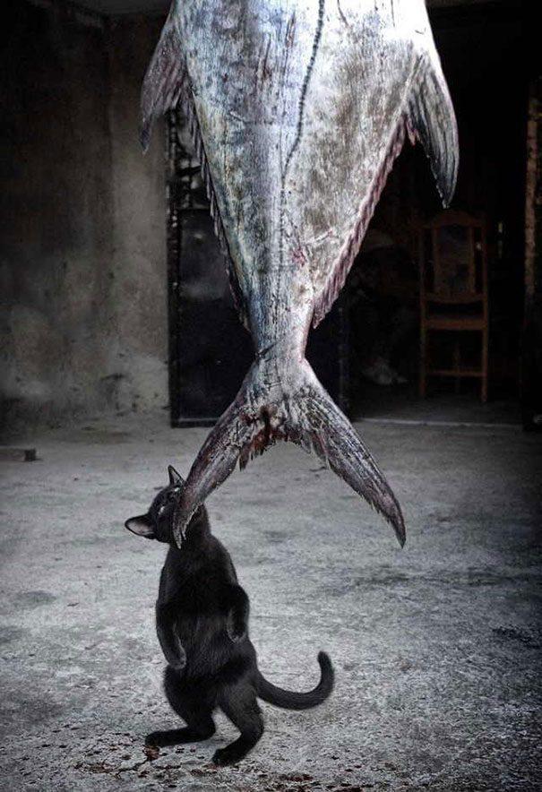 gatos-roubando-7
