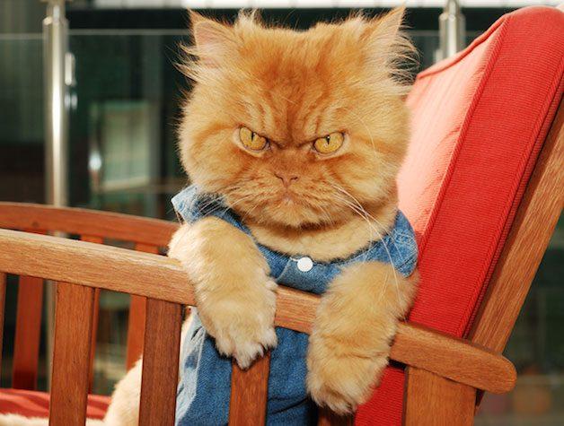grumpy5