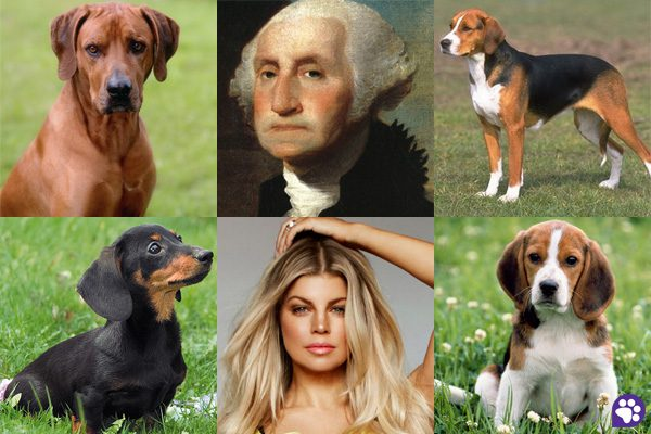 personalidade dono cachorro estaveis