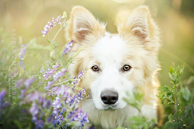 LovelyDogs1