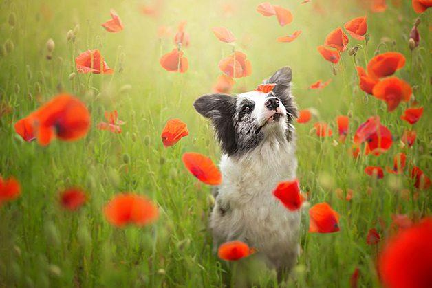 LovelyDogs13
